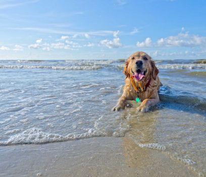 atd spain, dog on beach in Cadiz