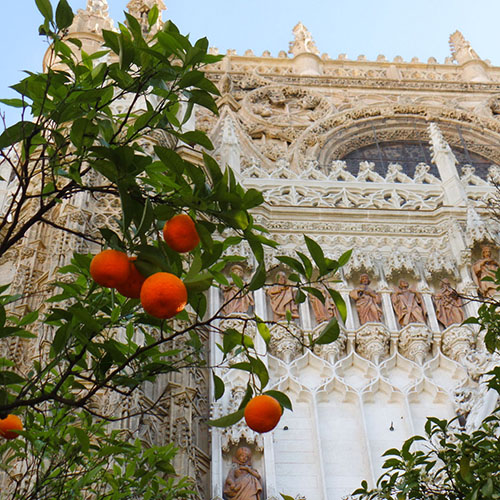 cathedral in Seville with orange tree